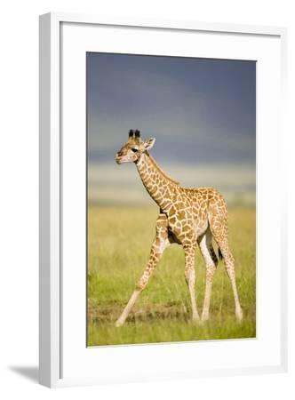 First Steps-Susann Parker-Framed Photographic Print