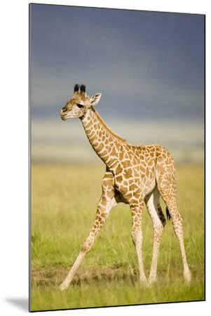First Steps-Susann Parker-Mounted Photographic Print