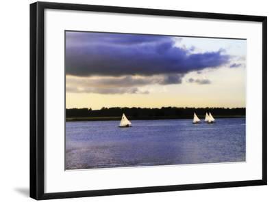 Sunfish Sailors I-Alan Hausenflock-Framed Photographic Print