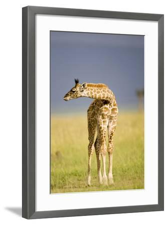 This Young One-Susann Parker-Framed Photographic Print