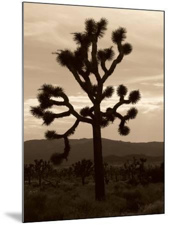 Yucca Brevifolia III-Erin Berzel-Mounted Photographic Print