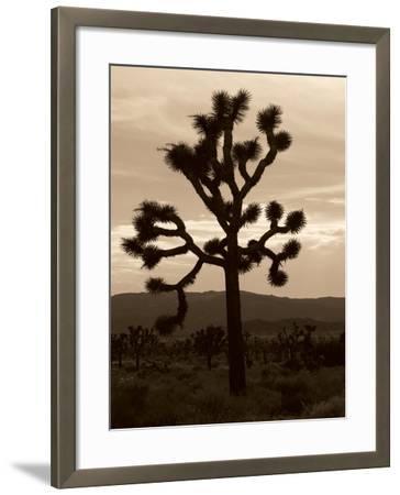 Yucca Brevifolia III-Erin Berzel-Framed Photographic Print