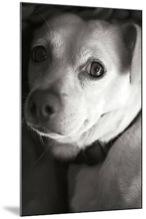Second Glance Black and White-Karyn Millet-Mounted Photographic Print