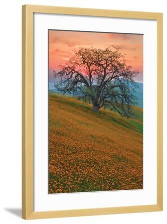 Rancheria-Mark Geistweite-Framed Photographic Print