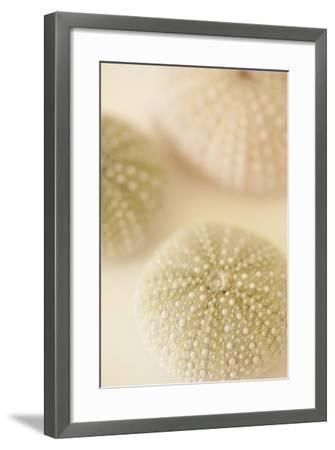 Ocean Treasures III-Karyn Millet-Framed Photographic Print