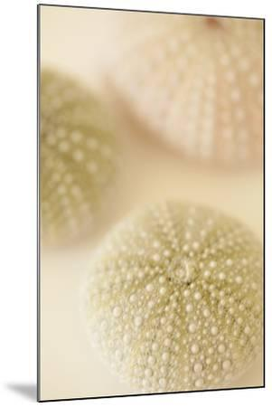 Ocean Treasures III-Karyn Millet-Mounted Photographic Print