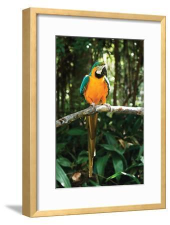 McCaw 2-Alan Hausenflock-Framed Photographic Print