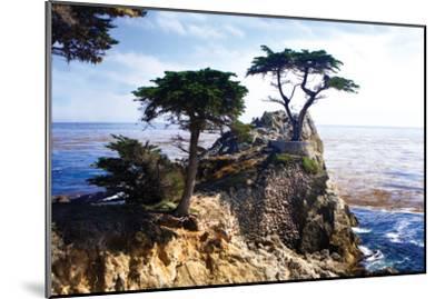 Lone Cypress 2-Alan Hausenflock-Mounted Photographic Print