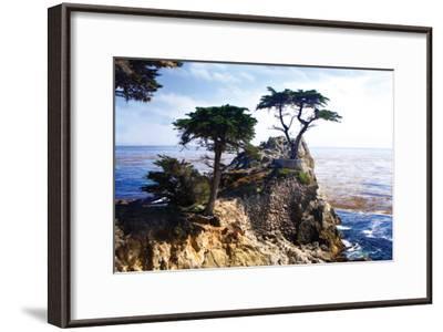 Lone Cypress 2-Alan Hausenflock-Framed Photographic Print