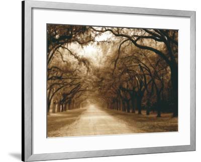 Savannah Oaks I-Alan Hausenflock-Framed Photographic Print