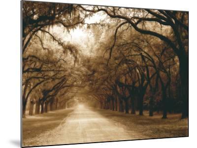 Savannah Oaks I-Alan Hausenflock-Mounted Photographic Print