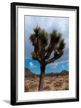 Joshua Tree II-Erin Berzel-Framed Photographic Print