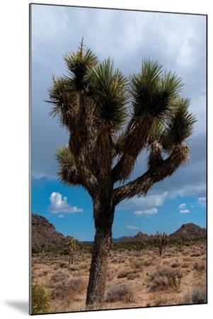 Joshua Tree II-Erin Berzel-Mounted Photographic Print