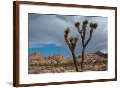 Joshua Tree III-Erin Berzel-Framed Photographic Print