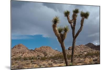 Joshua Tree III-Erin Berzel-Mounted Photographic Print