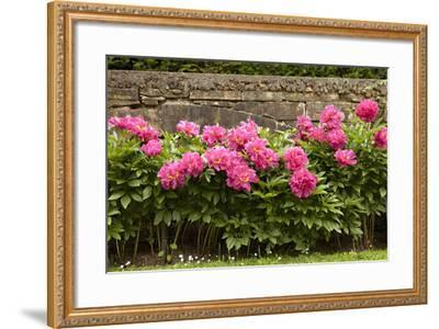 Garden Peonies II-Karyn Millet-Framed Photographic Print