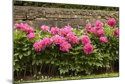 Garden Peonies II-Karyn Millet-Mounted Photographic Print