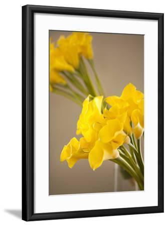 Yellow Calla Lilies-Karyn Millet-Framed Photographic Print