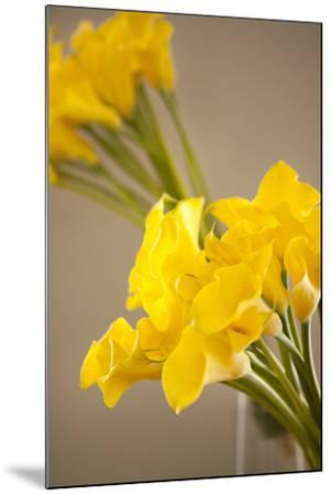 Yellow Calla Lilies-Karyn Millet-Mounted Photographic Print