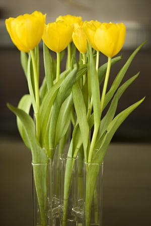 Yellow Tulips-Karyn Millet-Framed Photographic Print