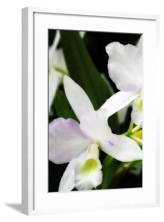 White Lady I-Alan Hausenflock-Framed Photographic Print