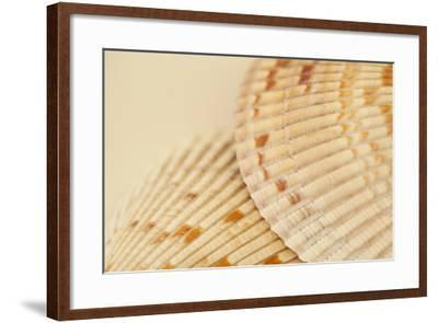 Ocean Treasures XIII-Karyn Millet-Framed Photographic Print