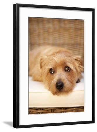 A Dog's Life VI-Karyn Millet-Framed Photographic Print