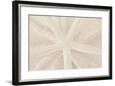 Ocean Treasures VII-Karyn Millet-Framed Photographic Print