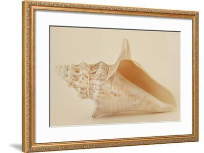 Ocean Treasures IX-Karyn Millet-Framed Photographic Print