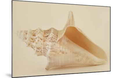 Ocean Treasures IX-Karyn Millet-Mounted Photographic Print