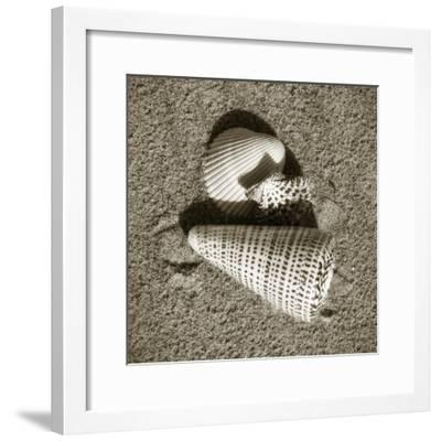 Seashells VII-Alan Hausenflock-Framed Photographic Print