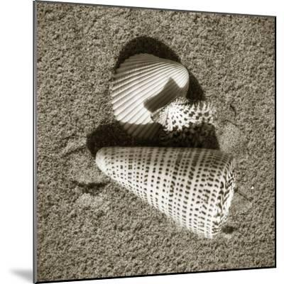 Seashells VII-Alan Hausenflock-Mounted Photographic Print