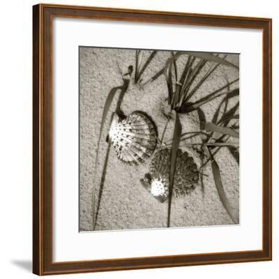 Seashells IV-Alan Hausenflock-Framed Photographic Print