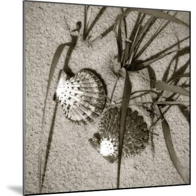 Seashells IV-Alan Hausenflock-Mounted Photographic Print