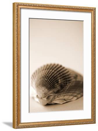Shell Symmetry I-Karyn Millet-Framed Photographic Print