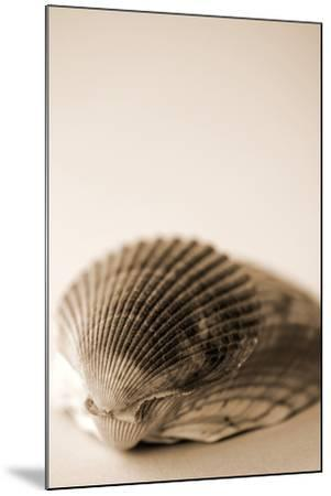 Shell Symmetry I-Karyn Millet-Mounted Photographic Print