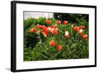 Poppies I-Alan Hausenflock-Framed Photographic Print