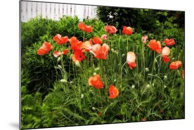 Poppies I-Alan Hausenflock-Mounted Photographic Print
