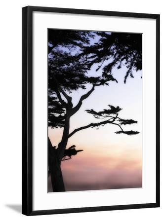 Cypress Silhouette 4-Alan Hausenflock-Framed Photographic Print