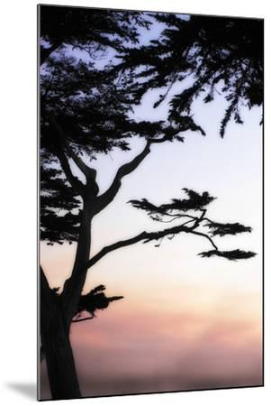 Cypress Silhouette 4-Alan Hausenflock-Mounted Photographic Print