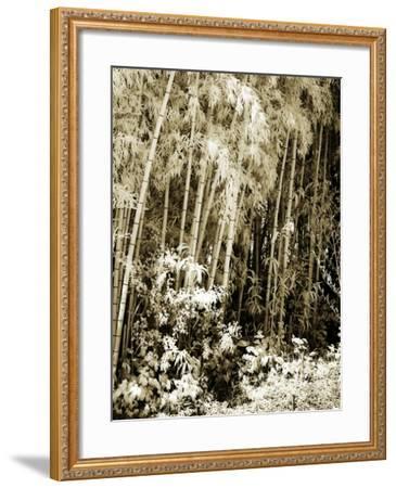Bamboo Grove I-Alan Hausenflock-Framed Photographic Print