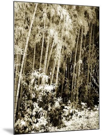 Bamboo Grove I-Alan Hausenflock-Mounted Photographic Print
