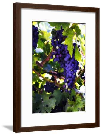 Grapes 2-Alan Hausenflock-Framed Photographic Print