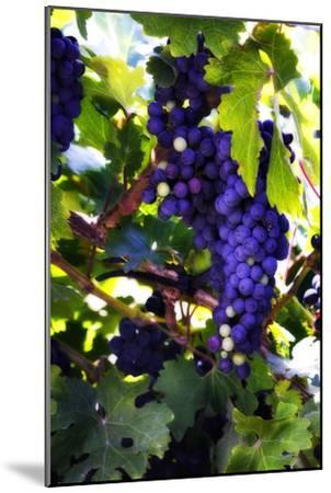 Grapes 2-Alan Hausenflock-Mounted Photographic Print