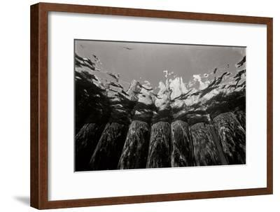 Pier Pilings 1-Lee Peterson-Framed Photographic Print
