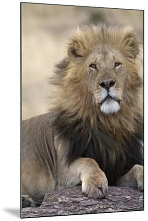 Africa's King-Susann Parker-Mounted Photographic Print