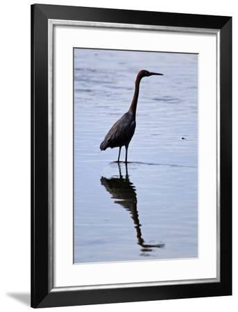 Bird 4-Lee Peterson-Framed Photographic Print
