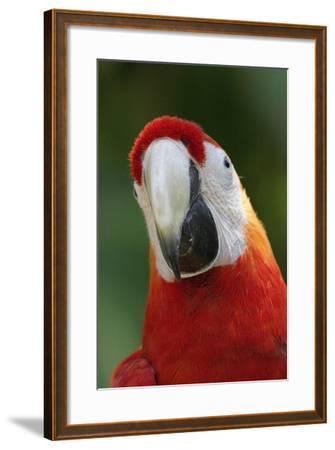 Scarlet Feather-Susann Parker-Framed Photographic Print