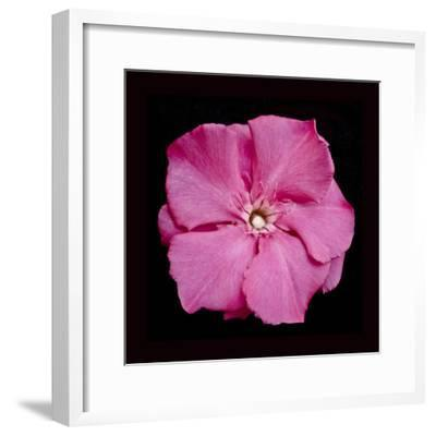 Pink Flower-Lee Peterson-Framed Photographic Print