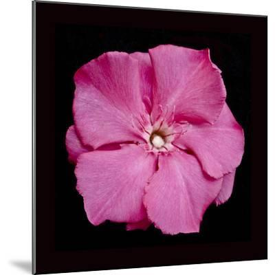 Pink Flower-Lee Peterson-Mounted Photographic Print